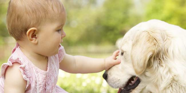 Dogs May Protect Babies from Asthma, Allergies