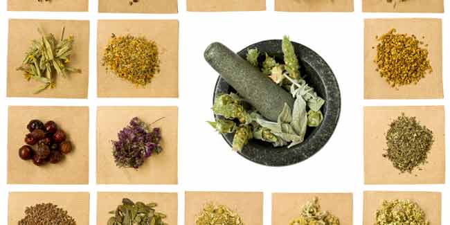 How Herbal Remedies Work in Controlling Diabetes