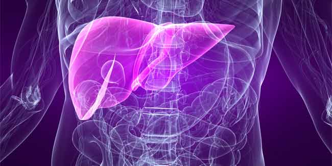 Now Human Liver can be Created from Stem Cells
