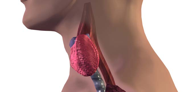 10 Things To Know about Thyroid Hormones