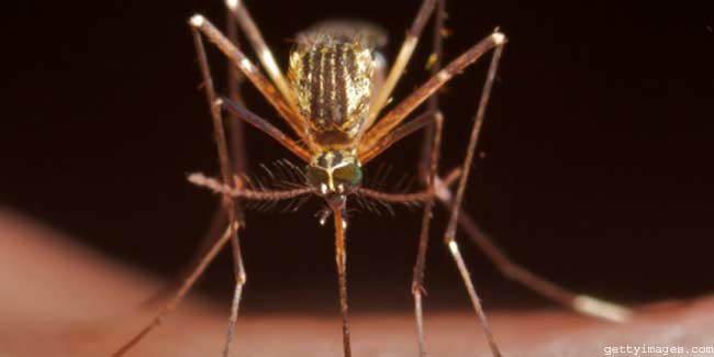 Investigational Vaccine for Malaria found Protective and Safe during Clinical Evaluation