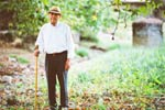 Even Daily Dose of Vitamin D does not Prevent Falls in Elderly