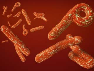 India on High Alert for Ebola <strong>Virus</strong>