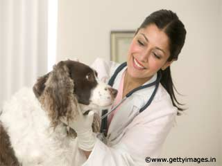 Veterinary Medicine in India