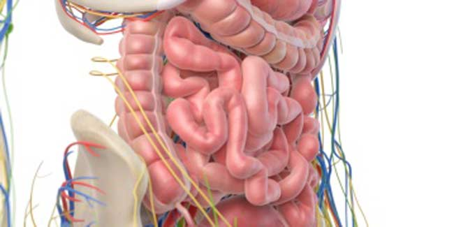 What is the Prognosis of Small Intestine Cancer?