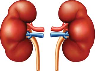 Things you Need to know To Keep your Kidneys Healthy