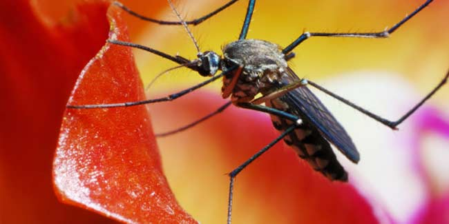 How can One Prevent Malaria?