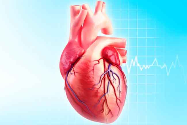Heart:More than a blood pumping organ