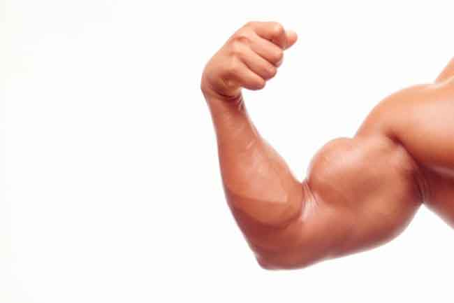 Build Your Biceps