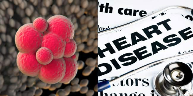 The Link between Cancer and Heart Diseases