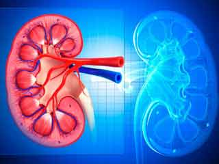 Natural Ways to Detoxify Your Kidneys