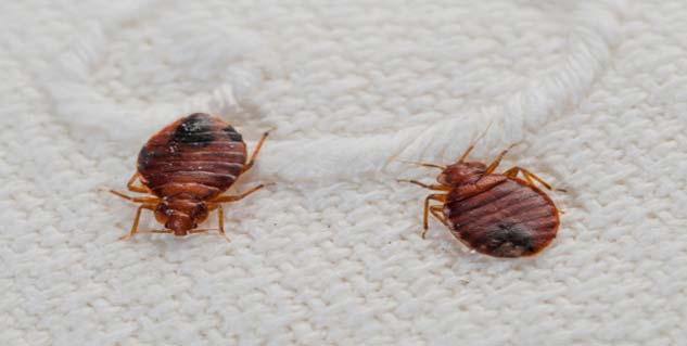 Can You Kill Bed Bugs In The Wash