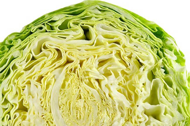 Cabbage for healing spider bites