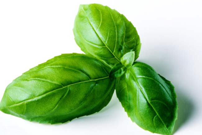 Treating tonsillitis with milk and basil leaves