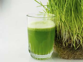 Wheatgrass benefits for diabetics