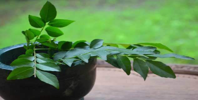 curry leaves in hindi
