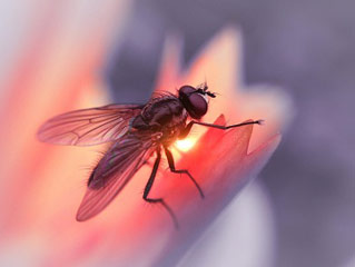4 reasons you should keep <strong>flies</strong> out of your home