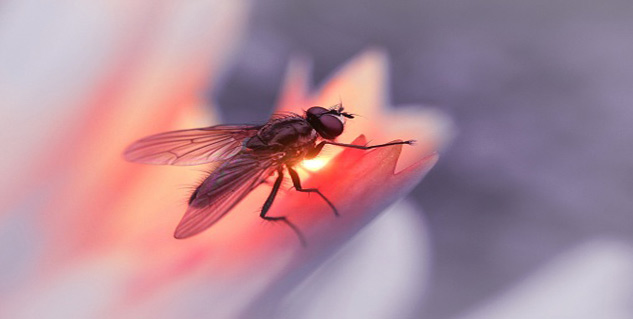 house fly dangers