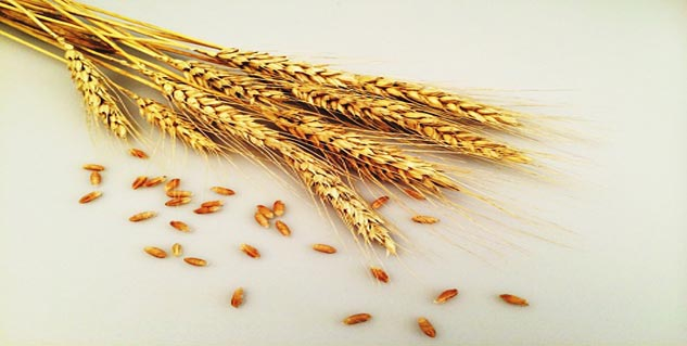 The difference between gluten sensitivity and wheat