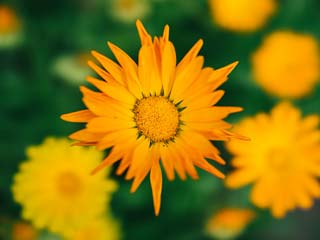 Amazing health and beauty <strong>benefits</strong> of calendula