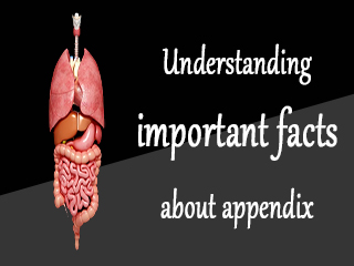 Understanding important facts about appendix