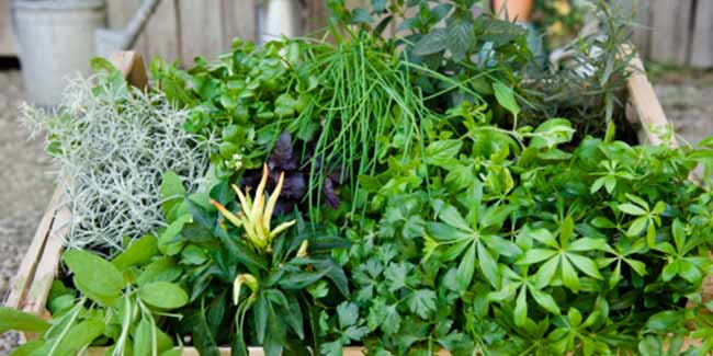 Best herbs for sexual health