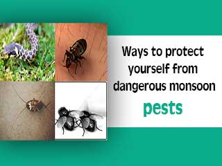 Ways to protect yourself from dangerous monsoon pests