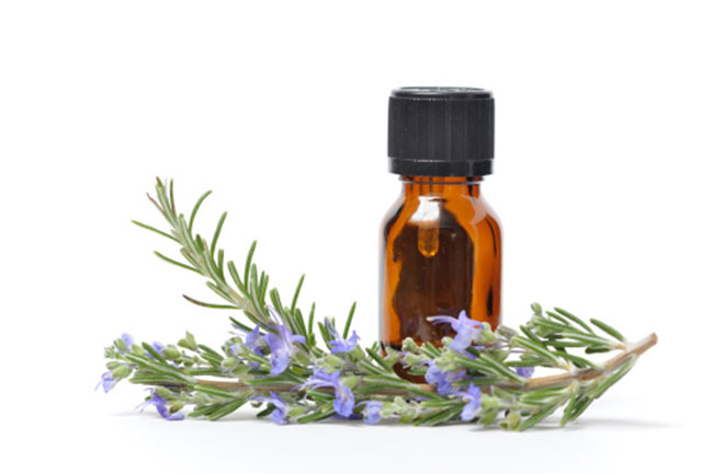 Rosemary essential oil for treating plaque and tartar