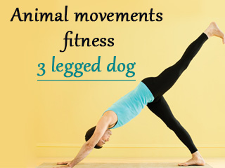 Animal movements fitness 3 legged dog