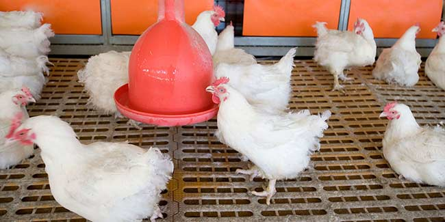 After Dengue and Chikungunya, brace yourselves for Bird Flu