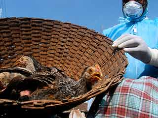 After Dengue and <strong>Chikungunya</strong>, brace yourselves for Bird Flu