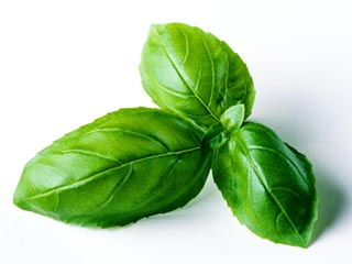 10 ways basil keeps you healthy