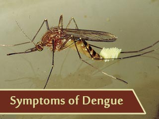<strong>Symptoms</strong> of Dengue