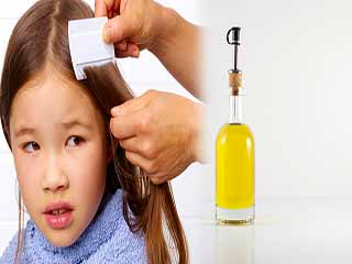 Is <strong>olive</strong> <strong>oil</strong> an effective treatment for lice?