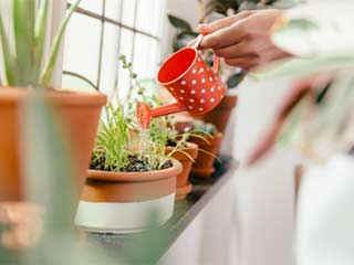 These plants can help you and your family ease stress