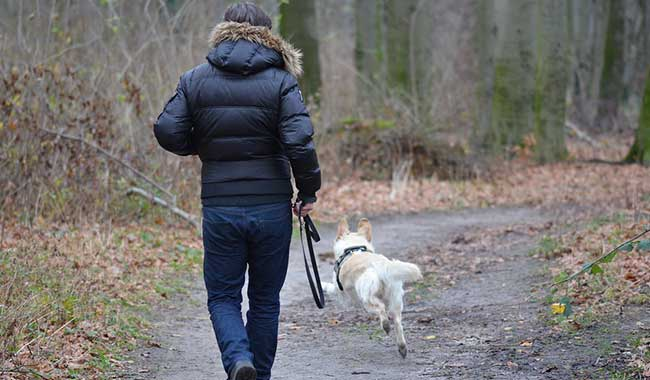 Run with your dog right with these tips