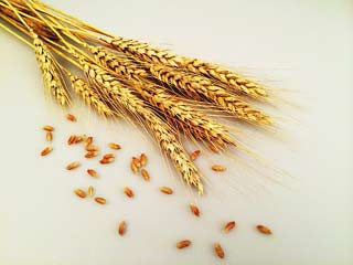 4 Reasons Why you must Eat Wheat Grains <strong>Daily</strong>