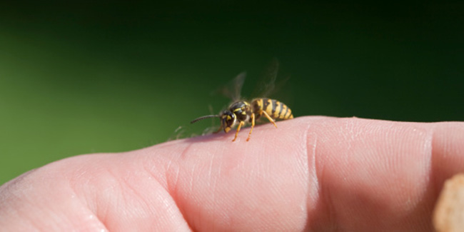 Bee and Wasp sting is more dangerous than snake bite