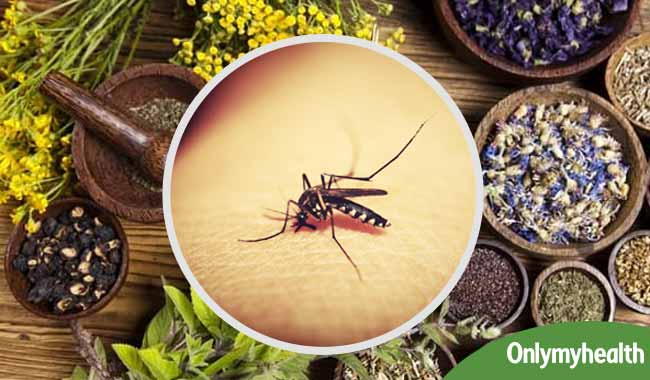 A new Ayurvedic Drug can help treat Dengue