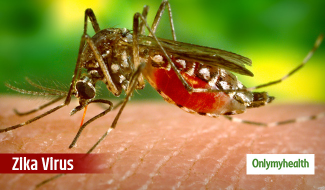 New treatment for ZIka Virus discovered