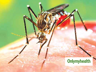Dengue is Fatal in Less than One Per Cent Cases