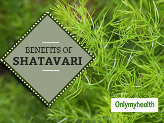 <strong>Shatavari</strong>: A Wonder Herb that Increases your Chances of Conception