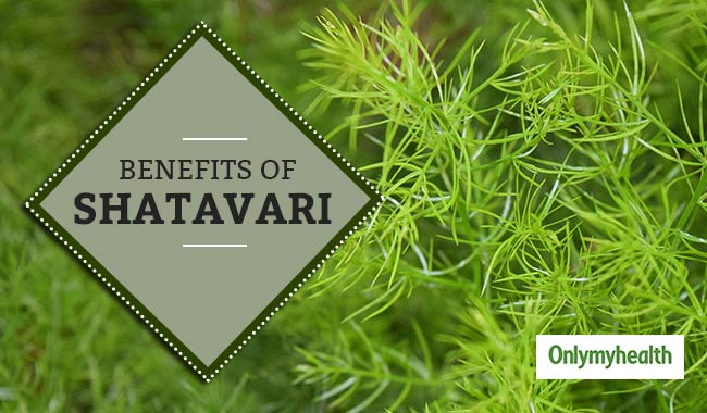Shatavari: A Wonder Herb that Increases your Chances of Conception