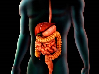 Microbes in your digestive system can determine your overall <strong>health</strong>: Study