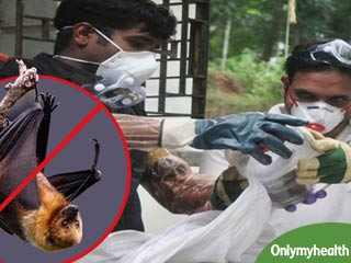 <strong>Fruit</strong> bats may not be the cause of Nipah Virus: Research