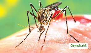 285 Dengue Cases reported in Delhi in a week