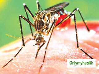 285 Dengue Cases reported in Delhi in a <strong>week</strong>