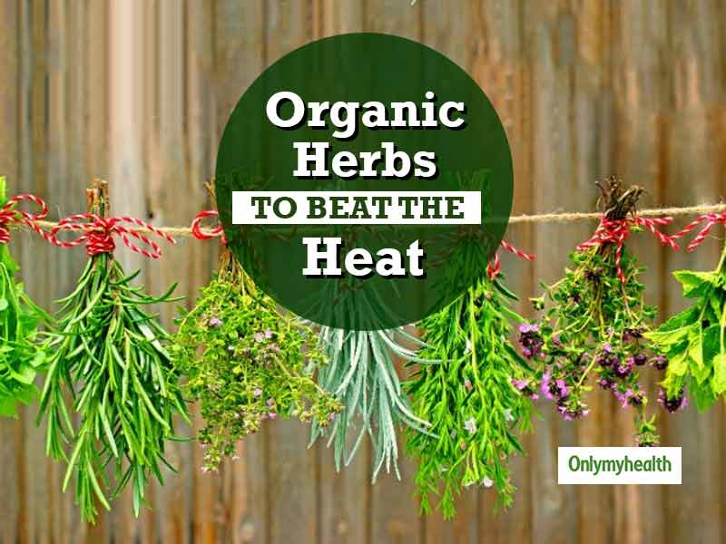 Beat the Heat with Ayurveda: 5 Organic Herbs You Must Try