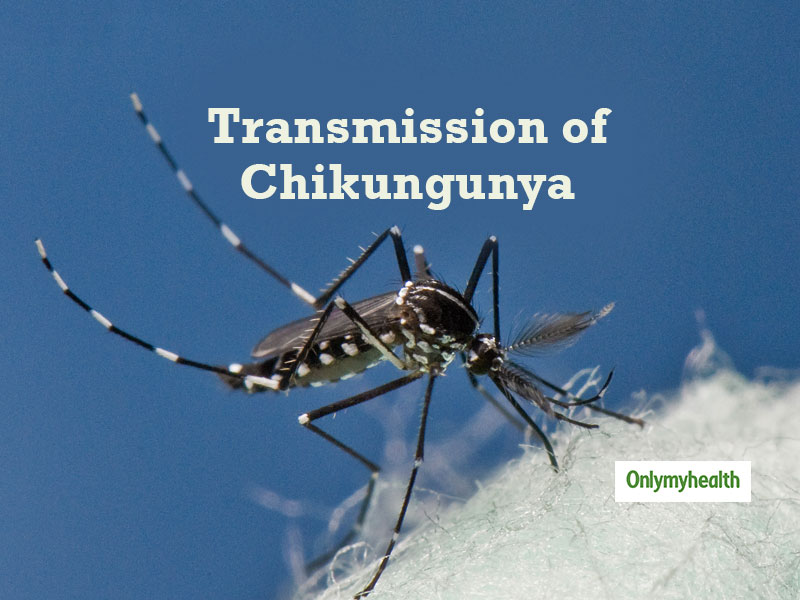 How Does The Chikungunya Virus Spread?