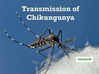 How Does The <strong>Chikungunya</strong> <strong>Virus</strong> Spread?